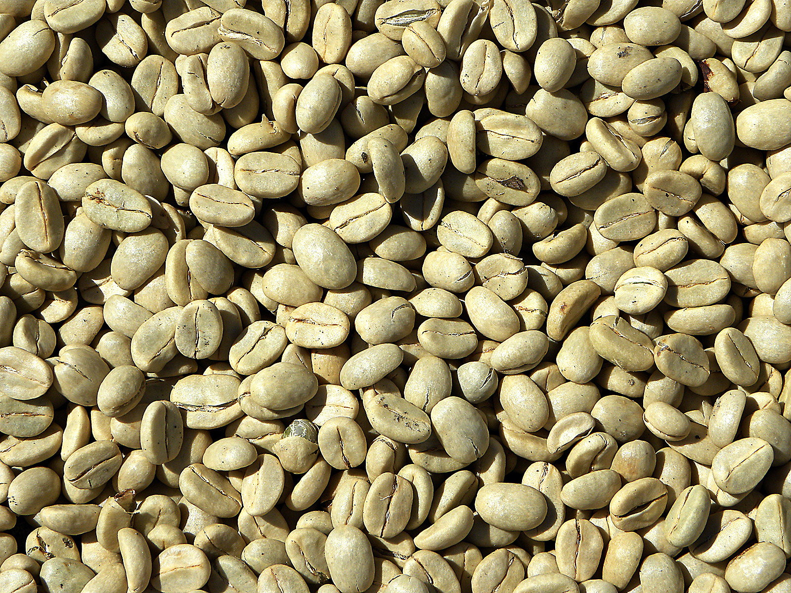 Green Coffee: Indonesia, Takengon Sumatra