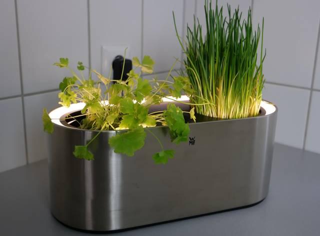 test wmf ambient kr uter home kr utergarten. Black Bedroom Furniture Sets. Home Design Ideas