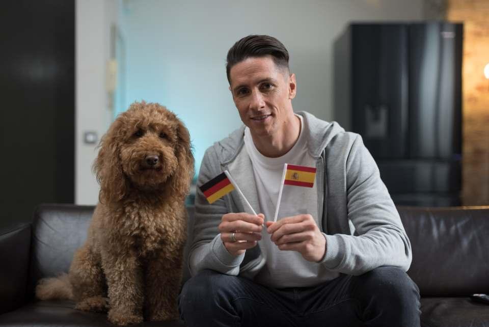 Hisense ist mit Fernando Torres, spanischer Gewinner des Goldenen Schuhs der UEFA Euro 2012, eine Patenschaft eingegangen. Fans können sich der Jagd des Starstürmers nach orakelnden Tieren anschließen, indem sie Bilder und Videos ihrer eigenen Haustiere in Aktion teilen.