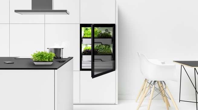 """Der """"Plantcube"""" bringt erntefrische Salate, Kräuter und Microgreens direkt in die Küche. Aktuell stehen 25 Sorten zur Auswahl."""