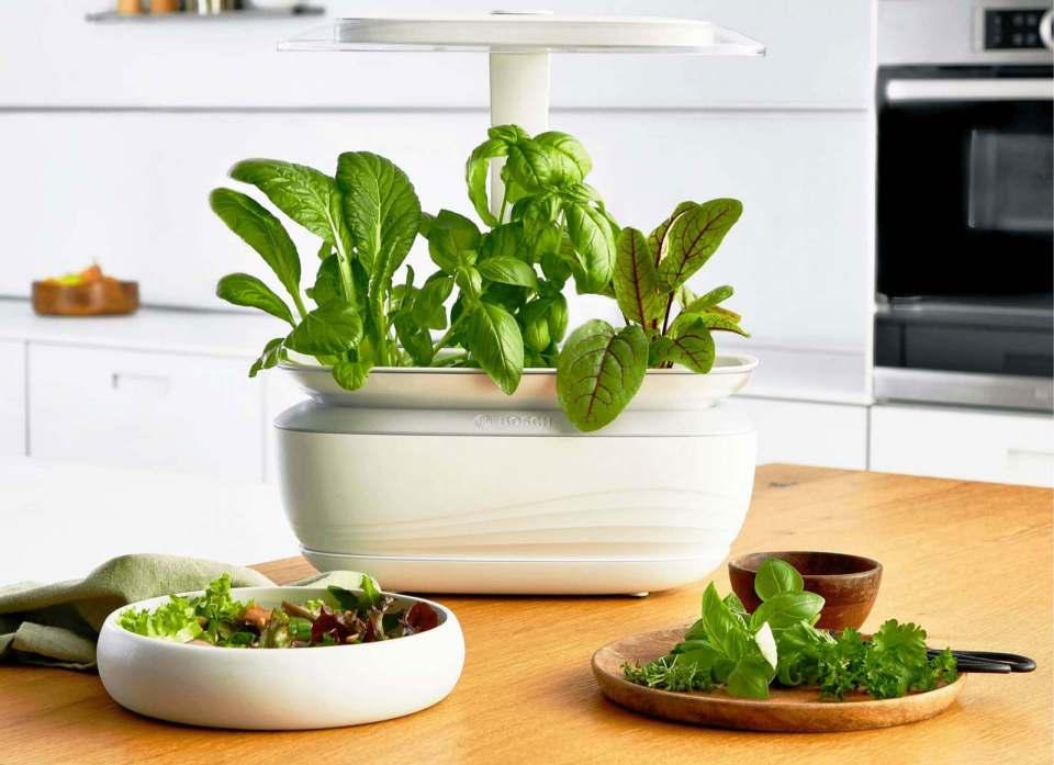 Wer seine Zutaten für die Küche unabhängig von der Jahreszeit selbst ernten möchte, hat mit dem stylischen SmartGrow Life von Bosch vielseitige Möglichkeiten. Fotos: AMK, Bosch, Miele, WMF, Stefan Randlkofer