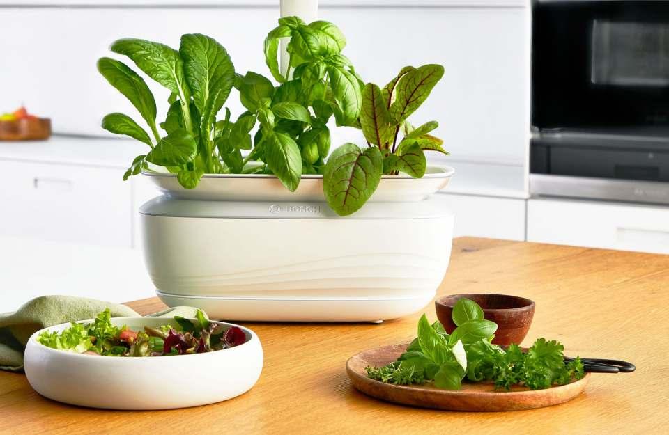 Bosch Indoor Gardening System SmartGrow Life für frische Kräuter.